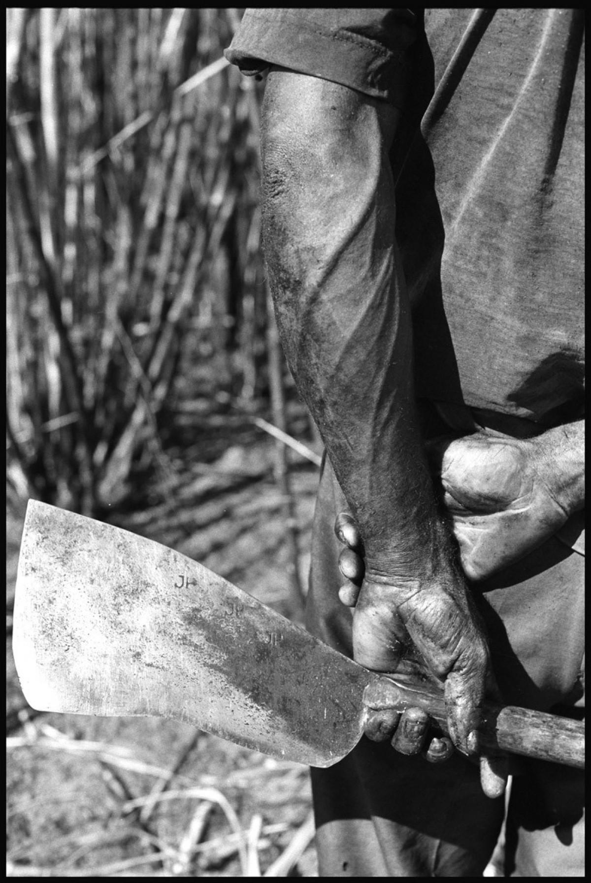 Sugarcane cutters