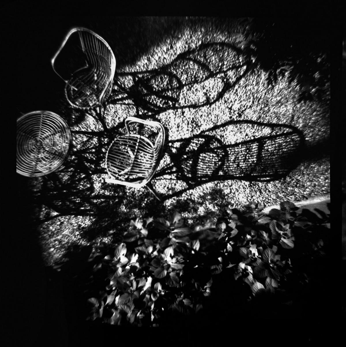 The Garden's Dream